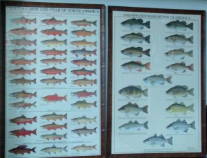 List of fish.