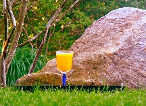 Mimosa on the rocks.